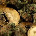Cannabis Company Buys Bitcoin As Hedge